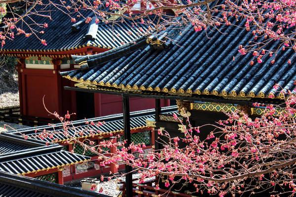 Một góc đền Kunozan Toshogu. Ảnh: ambahnz.deviantart.com