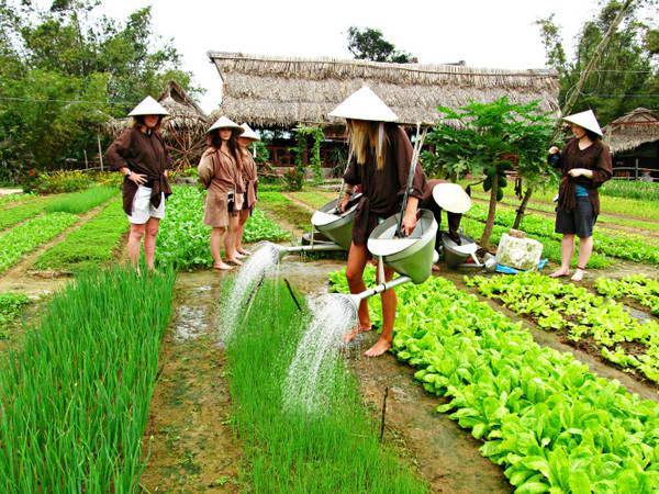 Du khách thích thú với trải nghiệm một ngày làm nông dân ở làng rau Trà Quế. Ảnh: caitlyndebeer.wordpress.com