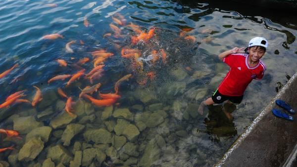 Niềm vui của một cậu bé khi được cho cá ăn tại khu du lịch Tràng An, Ninh Bình.