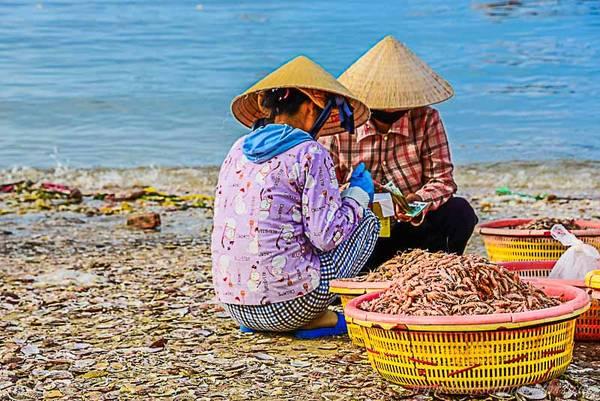 Hải sản được phân loại ngay tại bờ biển.