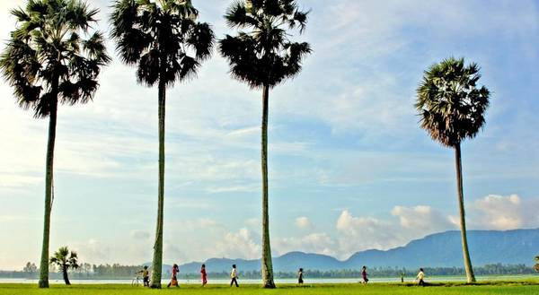 Cây thốt nốt là một đặc sản của du lịch An Giang nói chung và Châu Đốc nói riêng. Ảnh: victoriahotels.asia