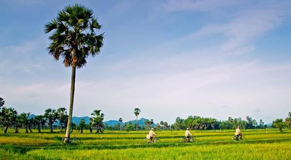 Cánh đồng lúa trồng xen kẽ với những hàng cây thốt nốt là những hình ảnh chỉ có ở An Giang. Ảnh: victoriahotels.asia