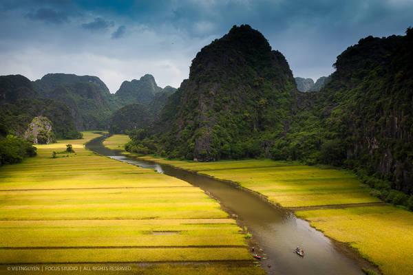 Ngô Đồng mùa lúa chín. Ảnh: Viet Nguyen