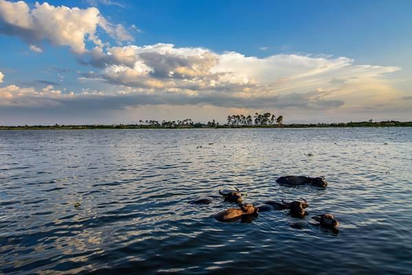 Chiều trên sông Hương. Ảnh: Hachi8