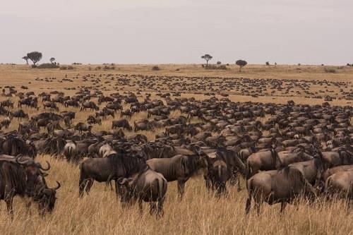 Vùng bình nguyên Migration, trải dài từ Maasai Mara đến Serengeti Sự di cư của hơn 2 triệu con linh dương, ngựa vằn diển ra hàng năm tại vùng bình nguyên của Maasai Mara, Kenya và Serengeti của Tanzania. Đây là cuộc di cư khổng lồ và ngoạn mục nhất mà con người có thể chứng kiến. Thời điểm đến tham quan tốt nhất là tại Maasai Mara từ tháng 7 đến tháng 9. Đây là thời gian mà các con thú tụ tập lại để vượt qua sông Mara vào đất Kenya.