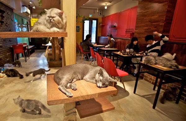 <strong>Quán cà phê mèo Nhật.</strong> Với quán cà phê mèo, những người yêu động vật chỉ cần bỏ ra một khoản tiền từ 5-8 USD để thưởng thức cà phêvà xung quanh là hàng chục con mèo, được tắm rửa chải chuốt sạch sẽ, đang vui chơi.
