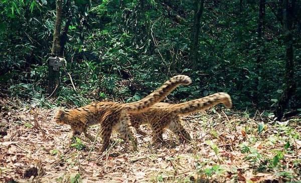 <strong>Khu bảo tồn sinh học quốc gia Nam Et Phou Louey: </strong> Nằm ở phía Đông Bắc Lào, đây là nơi bảo tồn rất nhiều loại động vật quý hiếm đang gặp nguy hiểm như hổ, hươu Sambar, vượn đen má trắng, bò rừng... Nam Et Phou Louey rộng khoảng 4.229 km<sup>2</sup> bao phủ 3 tỉnh. Tại khu Nam Nern Night Safari trong khu bảo tồn có các hoạt động thú vị như quan sát chim, lần theo dấu các con vật hoang dã trong đêm, tìm hiểu cây thuốc hay đi bộ đường dài...