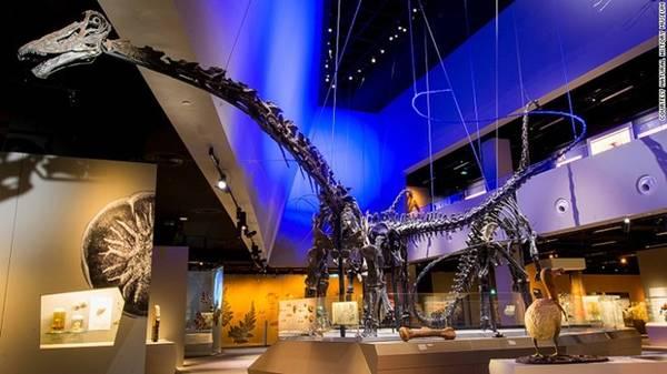 Khu Dino trưng bày các mẫu hóa thạch khủng long: Bạn sẽ bắt gặp Prince, Apollonia, và Twinky, những bộ xương khổng lồ nổi tiếng của bảo tàng. Bộ xương lớn nhất - Prince, đã được đưa tới Singapore bằng 27 thùng hàng lớn, và mất hơn 2 tuần để lắp ráp.