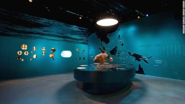 Bảo tàng có một bộ sưu tập đa dạng sinh học bao gồm 15 khu trưng bày lịch sử phát triển của các sinh vật trên trái đất, bao gồm thực vật, động vật thân mềm, bò sát, động vật có vú và cá. Nơi đây cũng giải đáp tất cả những câu hỏi trong suốt quá trình tiến hóa lịch sử, như vì sao loài chim lại sống sót sau thời kỳ khủng long, và tại sao động vật có xương sống lại tiến hóa lên từ cá.