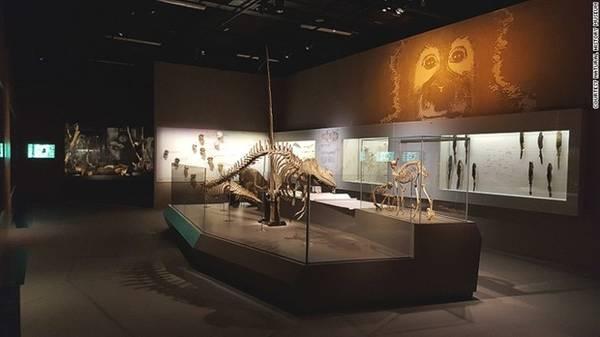 Vẻ đẹp của những bộ xương: Khách tham quan có thể so sánh những bộ xương, và ngạc nhiên trước vẻ đẹp của những chiếc sừng xoắn ốc - sừng của kỳ lân biển.