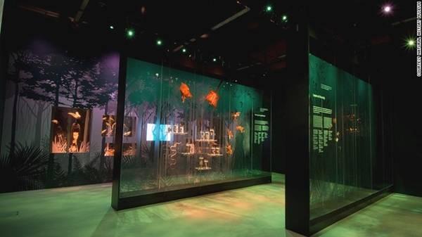 Rừng mưa nhiệt đới: Khu vực rừng mưa nhiệt đới của bảo tàng là nơi du khách có thể tìm hiểu được vì sao động vật (bao gồm có sóc, thằn lằn, và rắn…) có thể thích ứng và di chuyển dễ dàng từ ngọn cây này sang ngọn cây khác.