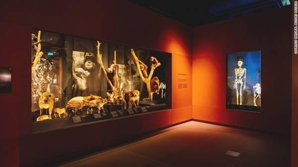 Có đôi chút đáng sợ nhưng đầy tính giáo dục: Khu trưng bày động vật có vú của bảo tàng có nhiều sinh vật mẫu như trong hình, bao gồm đười ươi, lợn rừng, và cả một xương người.