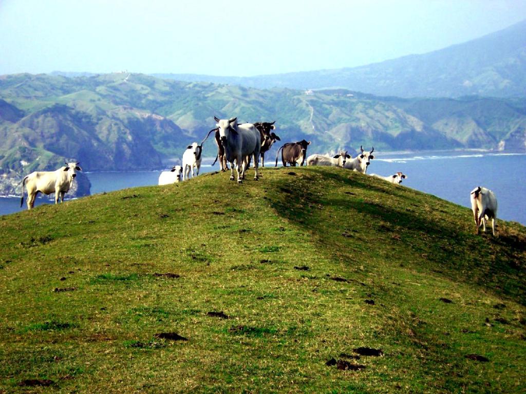 Những đồng cỏ xanh mướt mắt ở đảo Batan. Ảnh: wikipedia.org