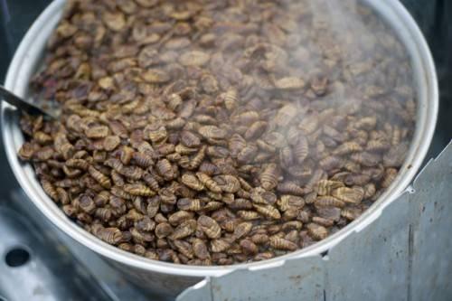 Nhộng tằm sau khi bị luộc để lấy sợi từ kén thì đem chế biến thành một món ăn.