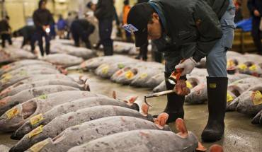 cho-ca-tsukiji-dia-chi-am-thuc-cho-nguoi-sanh-an-o-tokyo-ivivu-1