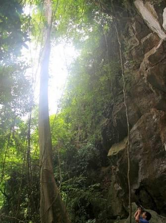 Ở dãy núi này, vẫn còn nhiều cây lớn tỏa bóng. Trước cửa hang Brai, nhiều loại dây leo to bằng cổ tay người lớn thõng từ trên núi xuống rất hoang sơ. Ảnh: Hưng Thơ.
