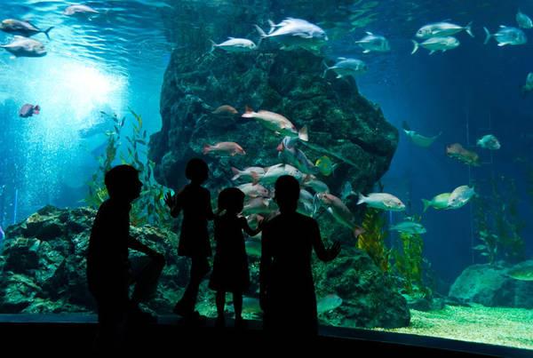 Thủy cung Shedd: Thủy cung này được thành lập năm 1930, xây dựng theo hình bát giác bằng đá cẩm thạch là một điểm đến thú vị khi ghé thăm thành phố Chicago sôi động. Đây là một trong những thủy cung lớn trên thế giới với các hồ chứa nước lớn, là nơi sinh sống của 1.500 loài bao gồm cá, động vật biển có vú, chim, rắn, ếch nhái và côn trùng. Ảnh: awesomeocean.co