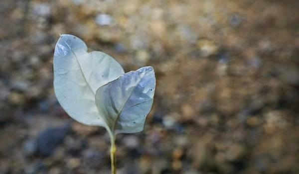Một mầm cây với lá màu trắng mọc trong lòng hang Nước Nứt.