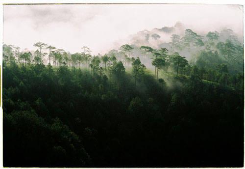 Bạn nên đi vào sáng sớm khi bình minh vừa ló dạng, sẽ bắt gặp những luồng sáng mờ ảo xuyên qua đồi thông xanh ngắt. Hòn Bồ là một nơi bạn nên đến để thưởng thức vẻ đẹp này.