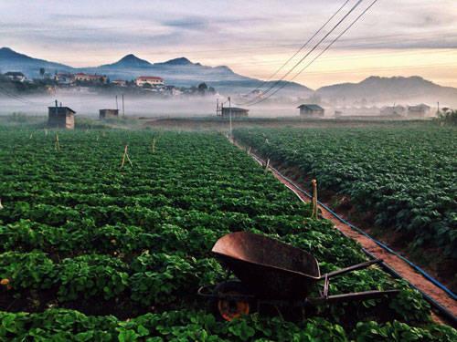 Nếu bạn ngại đi xa, có thể đến Lạc Dương vào sáng sớm. Phố huyện nằm ở phía Đông Đà Lạt. Đến đây bạn sẽ tận hưởng khí trời se lạnh cùng quang cảnh thiên nhiên mát mẻ trong những nông trại của người dân địa phương.
