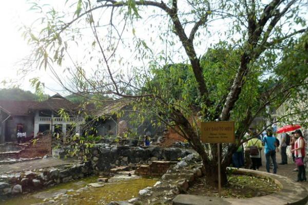 Cây đào Tô Hiệu trong nhà tù Sơn La - Ảnh: V.N.A.