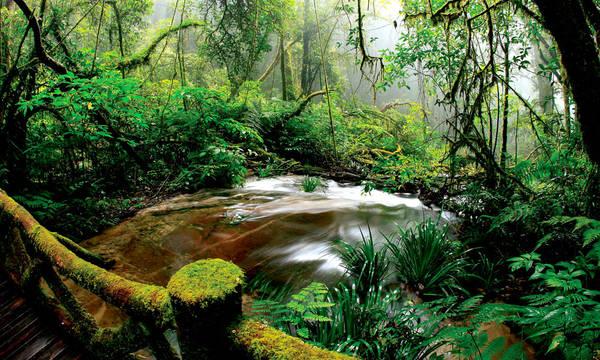 Rừng rậm ChiangMai là một trong những khu rừng nguyên sinh lớn và độc đáo nhất tại Thái Lan. Ảnh: backyardtravel.co