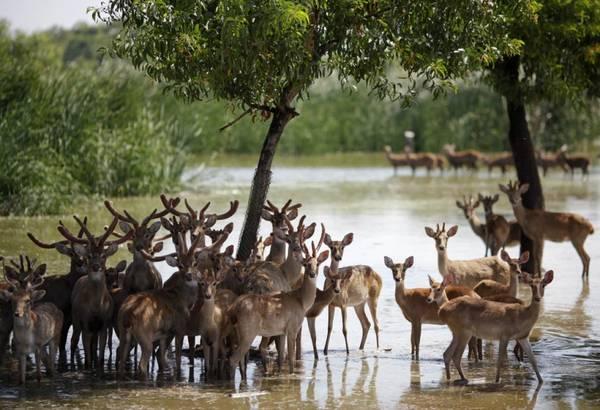 Các loại động vật hoang dã bên trong vườn thú Safari World. Ảnh: ibtimes.com