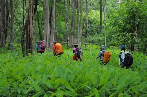 Đây là cung đường lý tưởng dành cho những ai đam mê trekking, muốn tìm chốn bình yên, hòa mình với thiên nhiên.