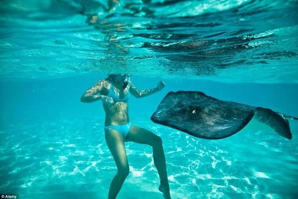 Thành phố cá đuối, Quần đảo Cayman: Thành phố Cá Đuối đã trở thành thiên đường cho các du khách muốn tiếp xúc với những chú cá đuối thân thiện và dễ mến.