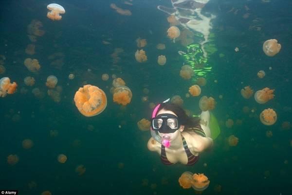 Hồ sứa, Palau: Nằm trên hòn đảo Palau thuộc Thái Bình Dương, hồ sứa là nơi duy nhất trên thế giới du khách có thể thoải mái bơi lội cùng sinh vật nổi tiếng với những cú chích đau đớn này.