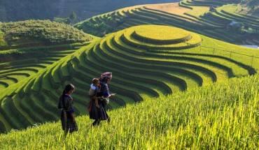 Vẻ đẹp của các thửa ruộng bậc thang ở Lao Chải – Tả Van đã khiến Sapa trở thành điểm đến rất thu hút khách du lịch. Ảnh: Ảnh: Vietnampremiertravel