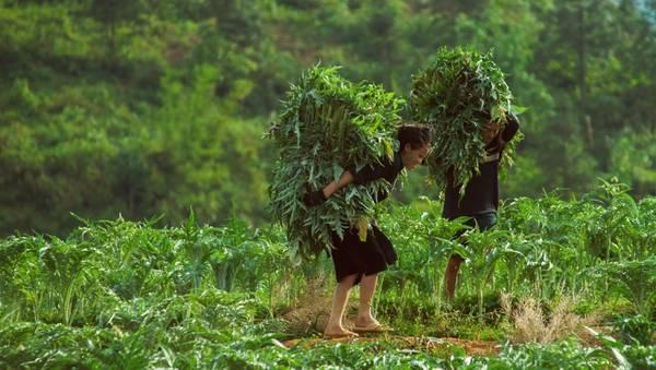 Đi bộ tham quan các bản làng giúp bạn có cơ hội hiểu hơn về cuộc sống của người dân địa phương. Ảnh: Buffalotours.com