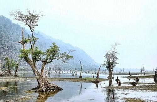 Những gốc cây khô tạo nên cảnh quan thú vị