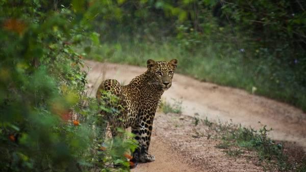 Đây là một trong những vườn quốc gia lâu đời và nổi tiếng nhất ở Sri Lanka. Ảnh: Globalgrasshopper.com