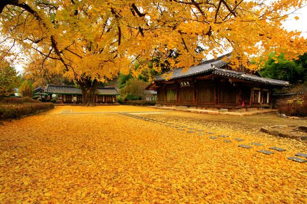 Lạc bước đến Jeonju 'viên ngọc quý' của du lịch Hàn Quốc