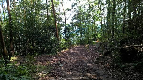 Đường rừng.