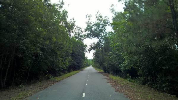 Ban đầu đường lên núi rất đẹp với hàng cây hai bên mát rượi.