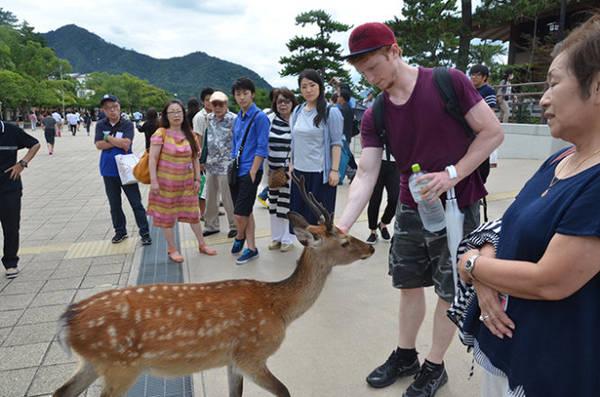 Tuy nhiên, thời gian lưu trú của mỗi chuyến đi không quá 90 ngày, theo thông tin trên website của Đại sứ quán Nhật Bản tại VN.