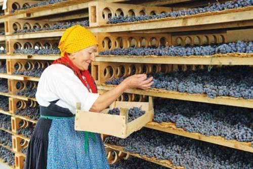 Bà chủ trong một gia đình tự trồng nho và tự làm rượu vang