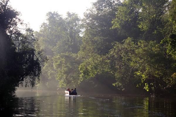Kinabatangan dài 560 km, bắt đầu từ vùng núi trung tâm đảo Borneo chảy ra biển Sulu. Hai bờ sông là rừng nguyên sinh. Thỉnh thoảng bạn lại bắt gặp cây cổ thụ cao vút, điểm xuyết quanh nó là những cây tầm gửi lâu năm. Người dân cho biết từ mép sông ra 30 mét là hành lang bảo tồn nên động thực vật ở đây rất phong phú và nguyên sơ.