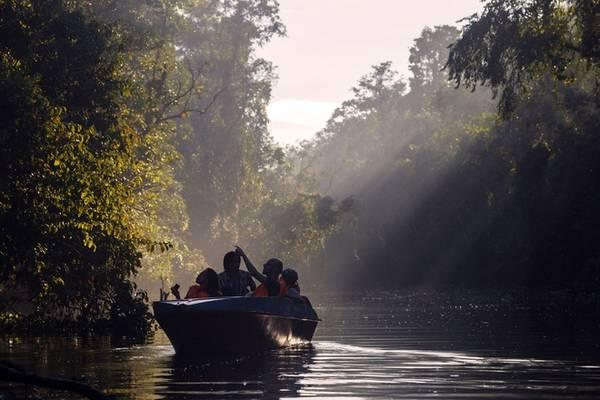 Về chiều muộn mặt trời hạ thấp tạo ra những chùm nắng toả xuống lòng sông. Vệt nắng len lỏi qua khóm cây làm bừng lên những góc rừng thưa. Du khách như được chìm vào trong cái ma mị của ánh sáng, hoang sơ của rừng cây, tĩnh lặng của lòng người khi tìm thấy một khoảng yên bình trong nhịp sống hiện đại.