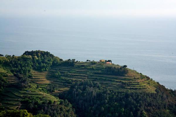 Cánh đồng nho nhìn ra biển ở các làng thuộc Cinque Terre - Ảnh: flickr