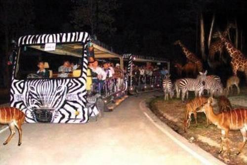 Vườn thú về đêm