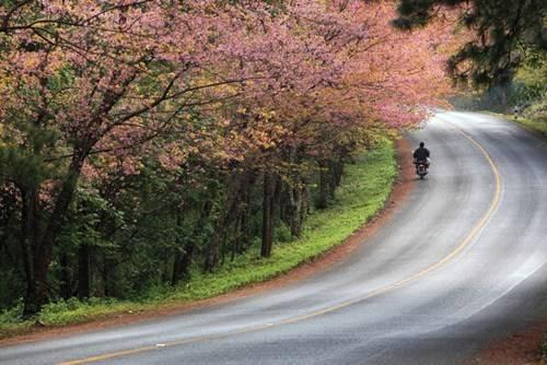 Cung đường ngập tràn hoa