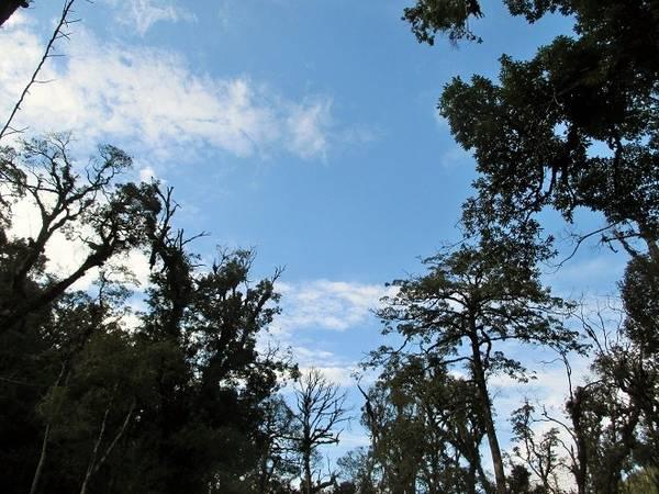 Description: Khi những cơn mưa đã ngớt, du khách dừng chân thảnh thơi ngắm bầu trời trong xanh trên những hàng cây cao ngút ngàn.