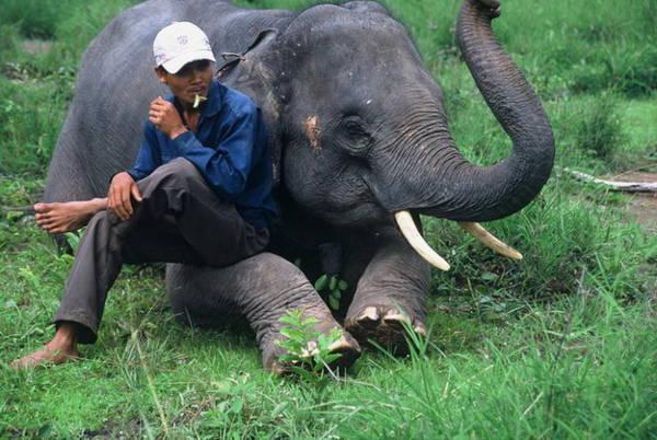Phút nghỉ ngơi của nài voi Y Mứt và voi Thoong Khăm - Ảnh: Niimura Yoko