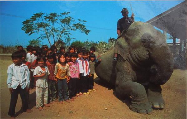 Các em nhỏ ở Đắk Lắk chụp hình chung với voi - Ảnh: Niimura Yoko