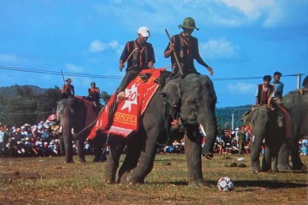 Ngày hội voi Buôn Đôn - Ảnh Niimura Yoko