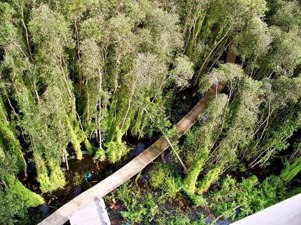 Từ tháp quan sát nhìn xuống, con đường lát bê tông chạy thẳng vào bên trong rừng tràm. Vì đây là rừng tràm ngập nước quanh năm nên để vào sâu bên trong không còn cách nào khác là phải làm cầu bê tông.