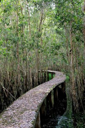 Nó không phải lúc nào cũng thẳng mà uốn lượn theo cánh rừng, hoặc để tránh những vùng nước sâu.